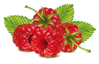 新鮮なフランボワーズ ラズベリー ライチ fresh fruits illustration framboise raspberry lychees