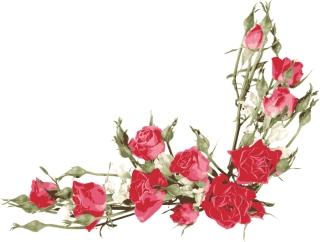 赤いバラの飾り罫 Roses flowers bouquets イラスト素材