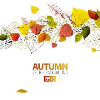 葉脈の背景 exquisite leaf background イラスト素材