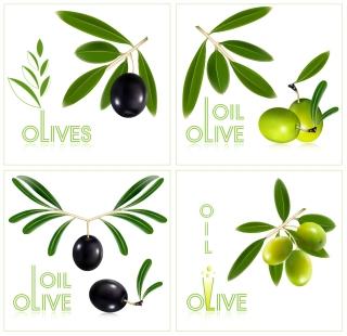 オリーブ オイル製品のデザイン見本 olives oil bottles イラスト素材2