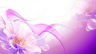 美しい花ビラと曲線の背景 Flower Pink Background Vector Art イラスト素材