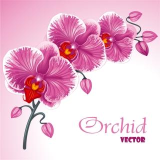 可憐な蘭の花ビラの背景 beautiful orchid flowers background イラスト素材