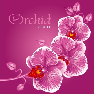 花ビラが美しい蘭の背景 beautiful orchid flowers background イラスト素材