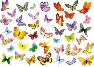 カラフルな模様が美しい蝶のクリップアート Set of Butterflies Decoration イラスト素材
